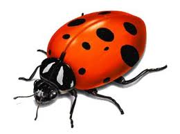 lady bug kitchen solutions nyc kitchens